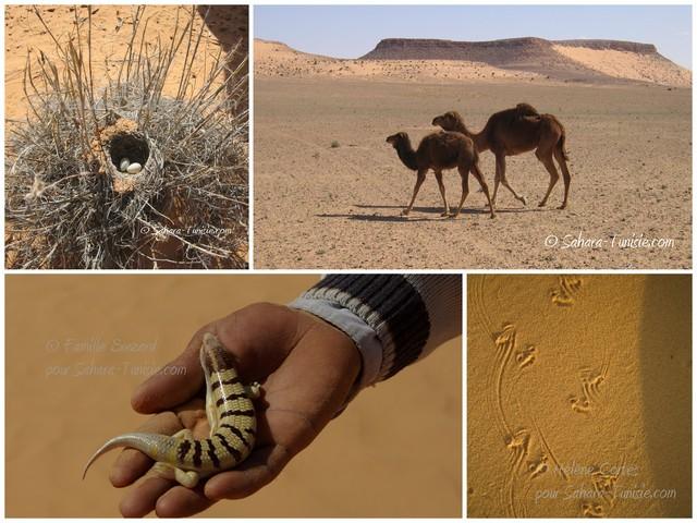 faune sahara tunisie