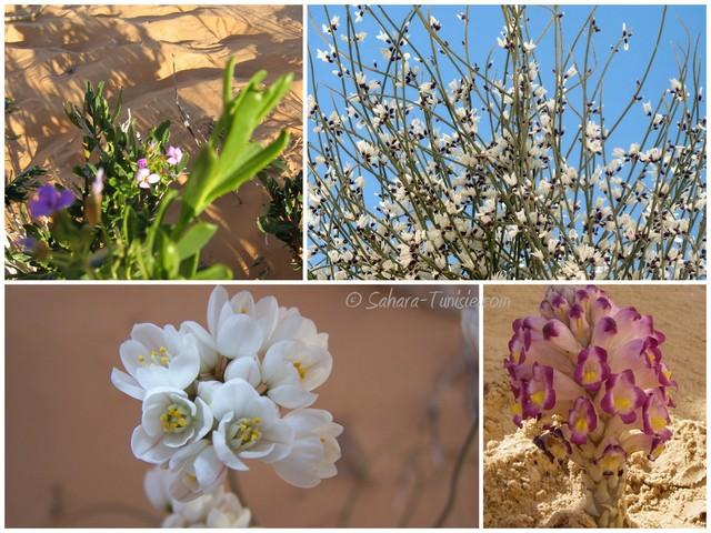 flore sahara tunisie
