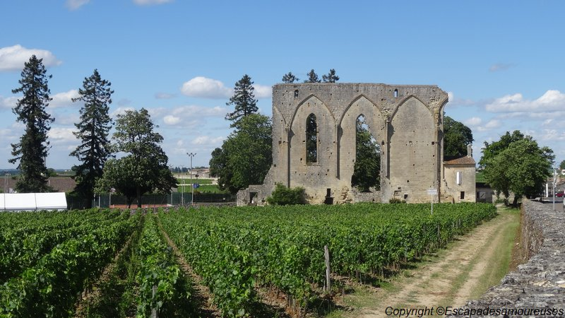 saintemilion10