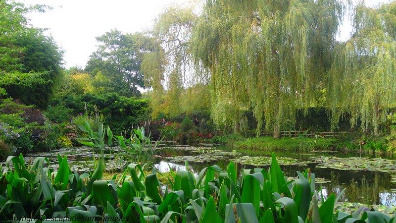 Jardin claude monet Giverny