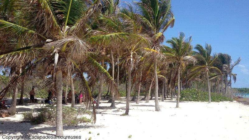 En Guadeloupe : une journée sur Petite-Terre