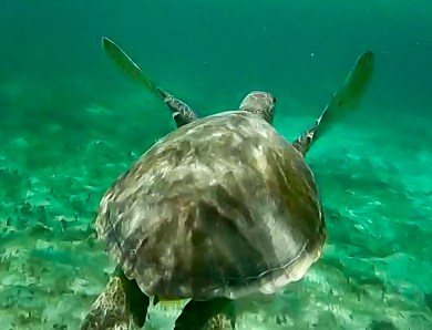 Snorkeling à Petite-Terre