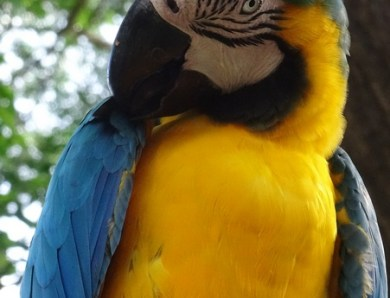 #EnFranceaussi: ornithologie en Guadeloupe.