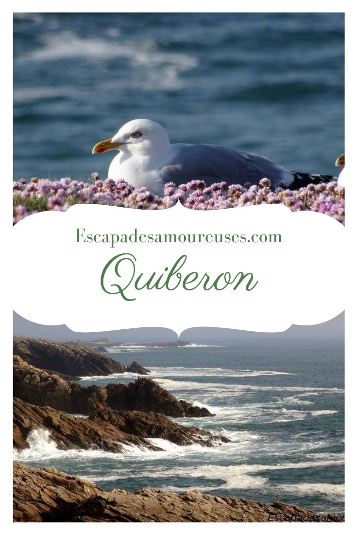 quiberonpinterest