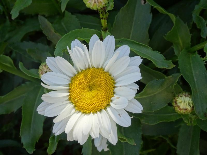 Auvers sur oise escapades amoureuses fleurs