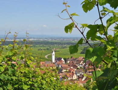 En Alsace à pied ou à vélo électrique.