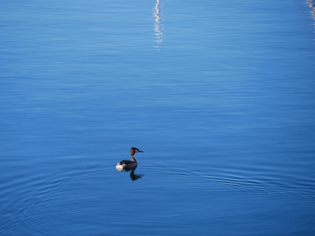 Evian-les-bains au bord du lac leman