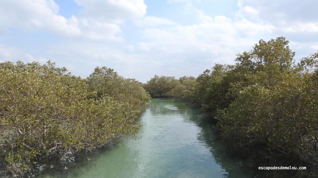 https://escapadesdemalou.com/parc-des-mangroves-abu-dhabi/