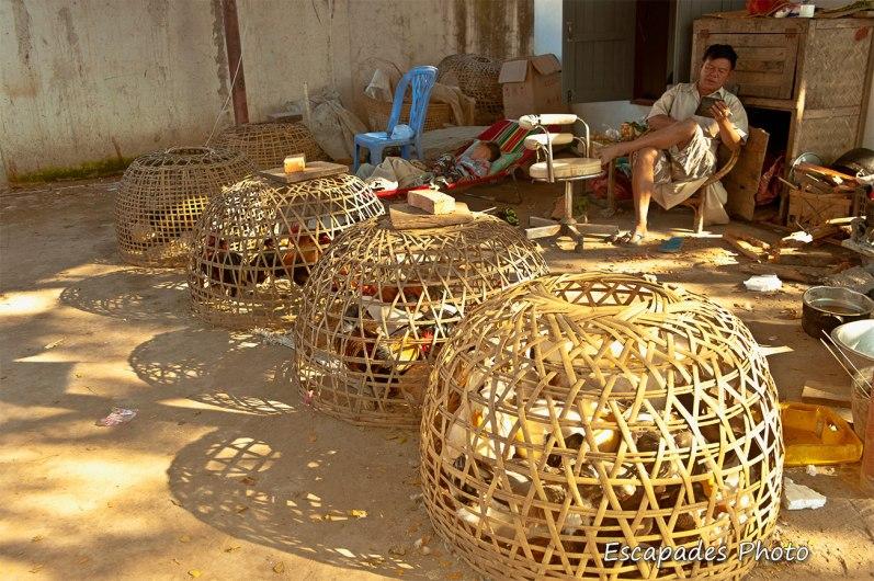 Marché de Luang Namtha - Coqs de combats en cage