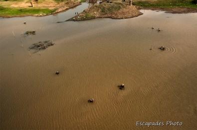 Pêche aux mollusques dans le Mékong
