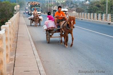 Les chevaux du pont Kizuna