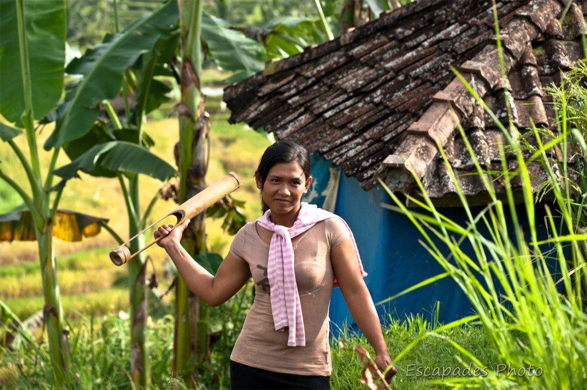 Jatiluwih : Crécelle dans la rizière