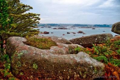 Ploumanac'h - paysage marin