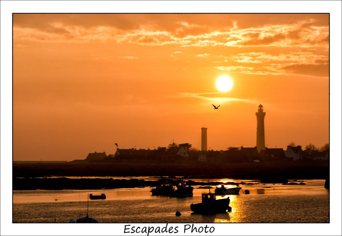 Eckmuhl - Un vol de goéland au coucher du soleil