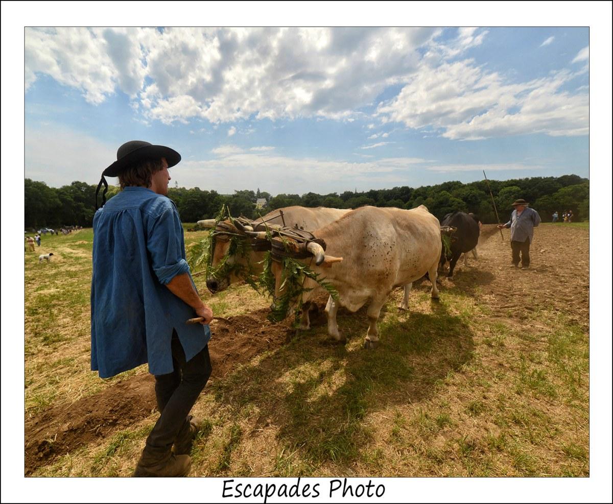 Labourage à l'ancienne avec les bœufs de Jean Bernard Huon