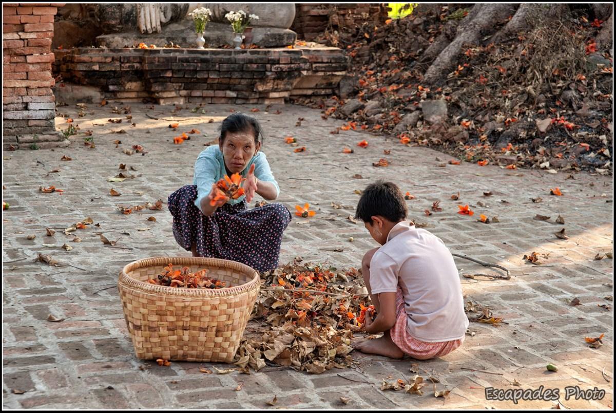 Birmane au kapokier rouge à Inwa