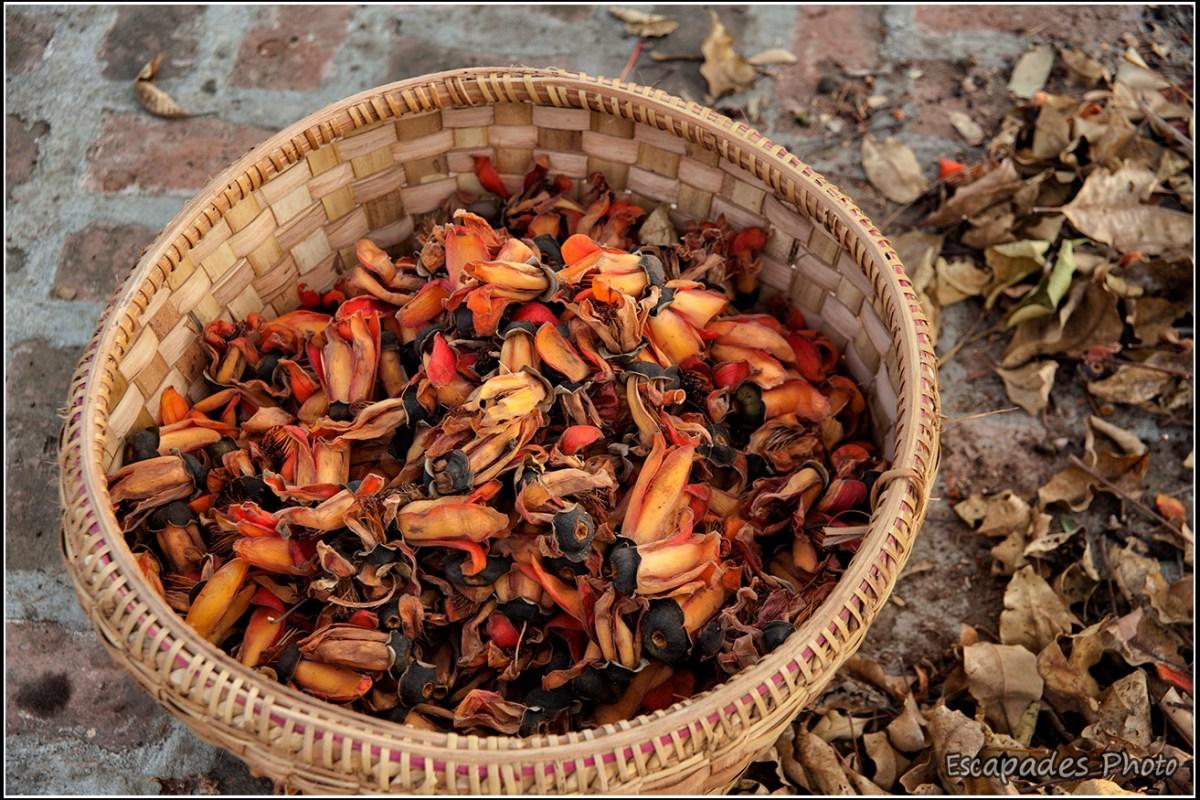 Inwa : Panier de fleurs de kapokier rouge