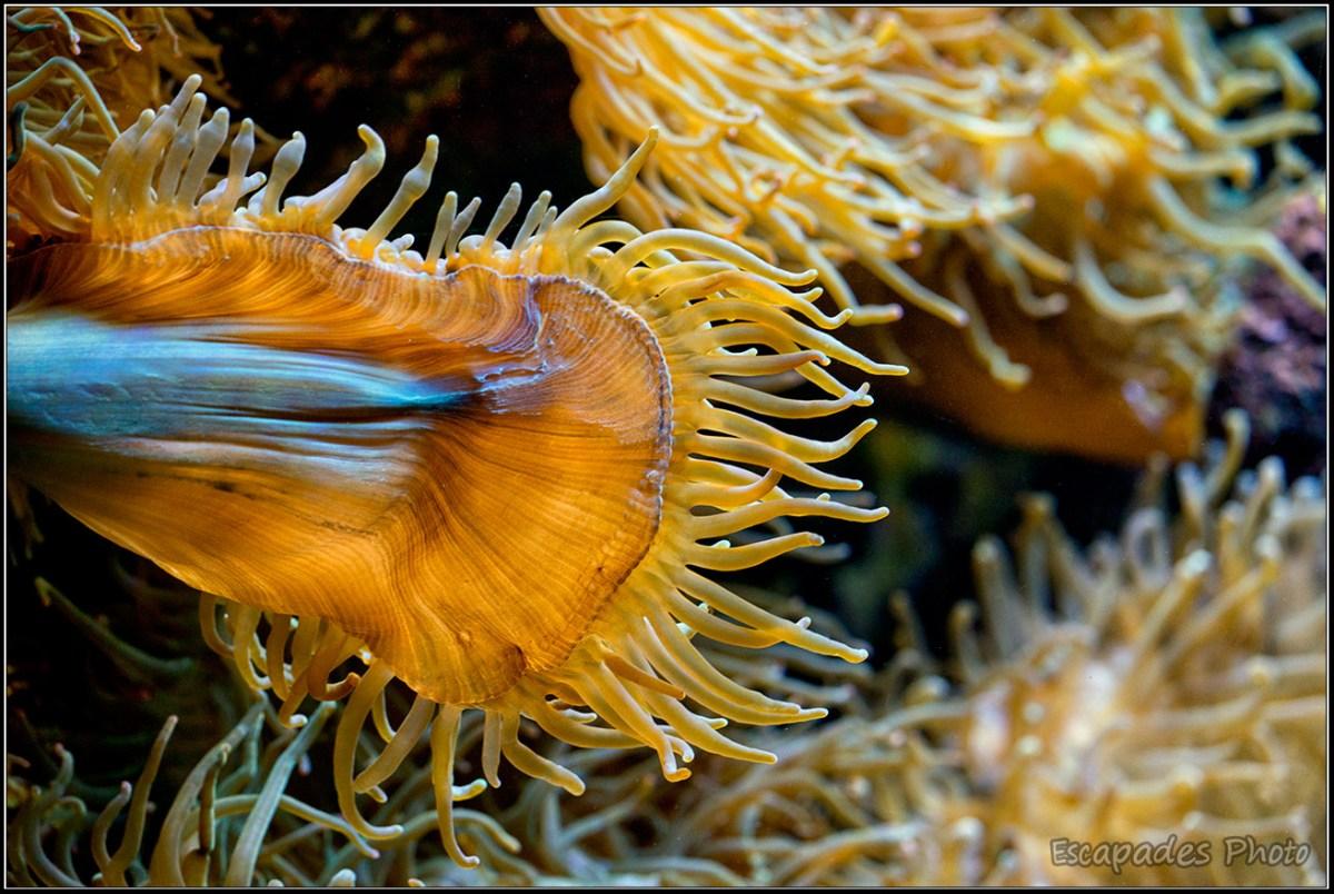 Corail à Océanopolis