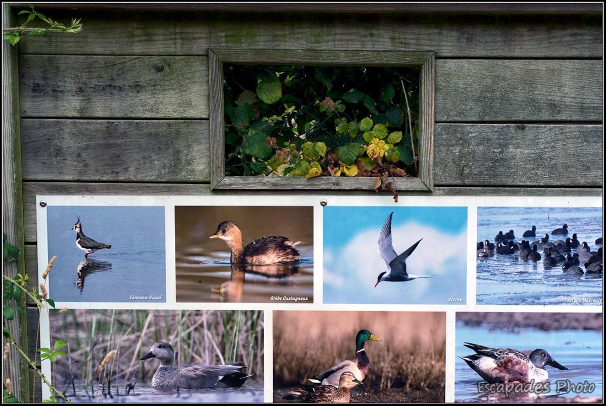 île d'Arz : Fenêtre d'observation