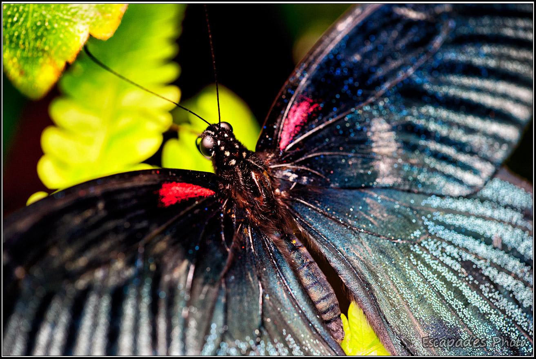 Papillon Kuala Lumpur - Butterfly Park