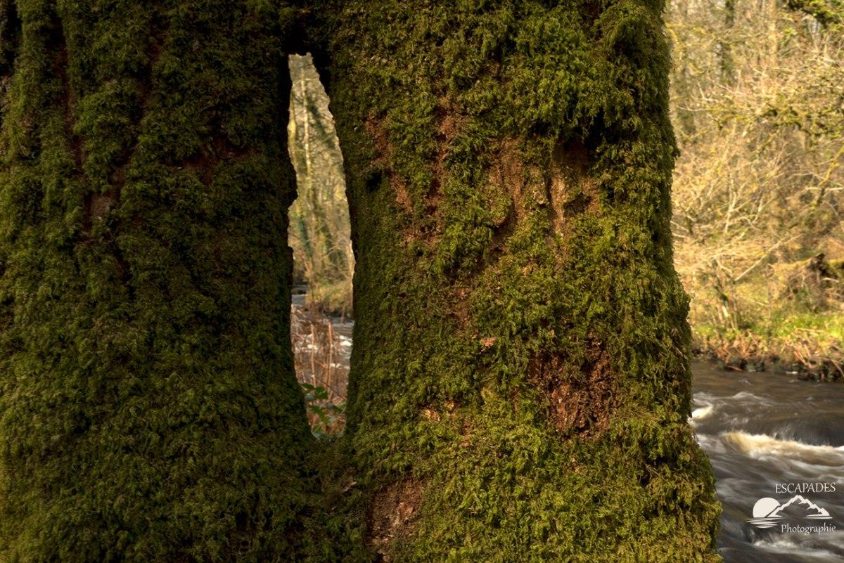 L'ellé et le chêne ou la rencontre du minéral et d'un chêne.