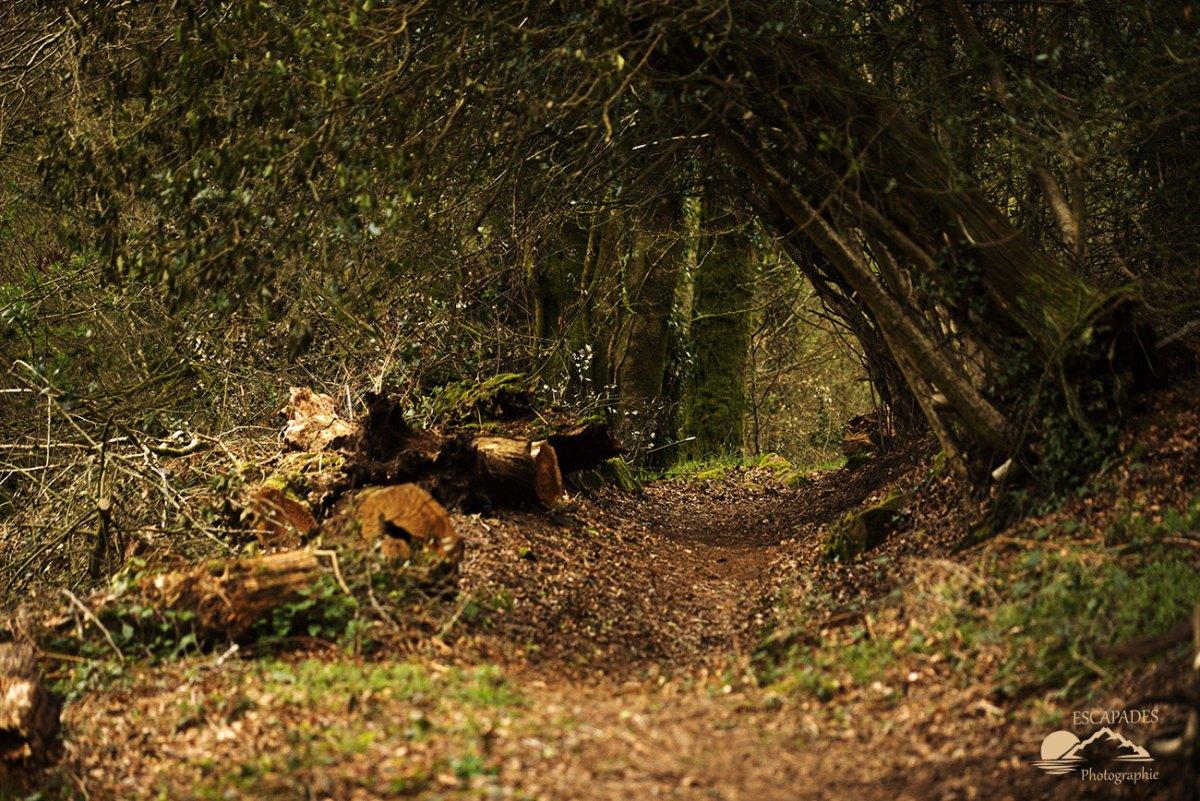 Lanvénégen, le sentier de la route des Moulins