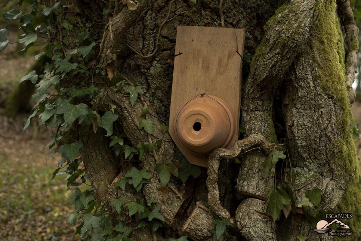 Sentier des moulins, le nichoir à insectes