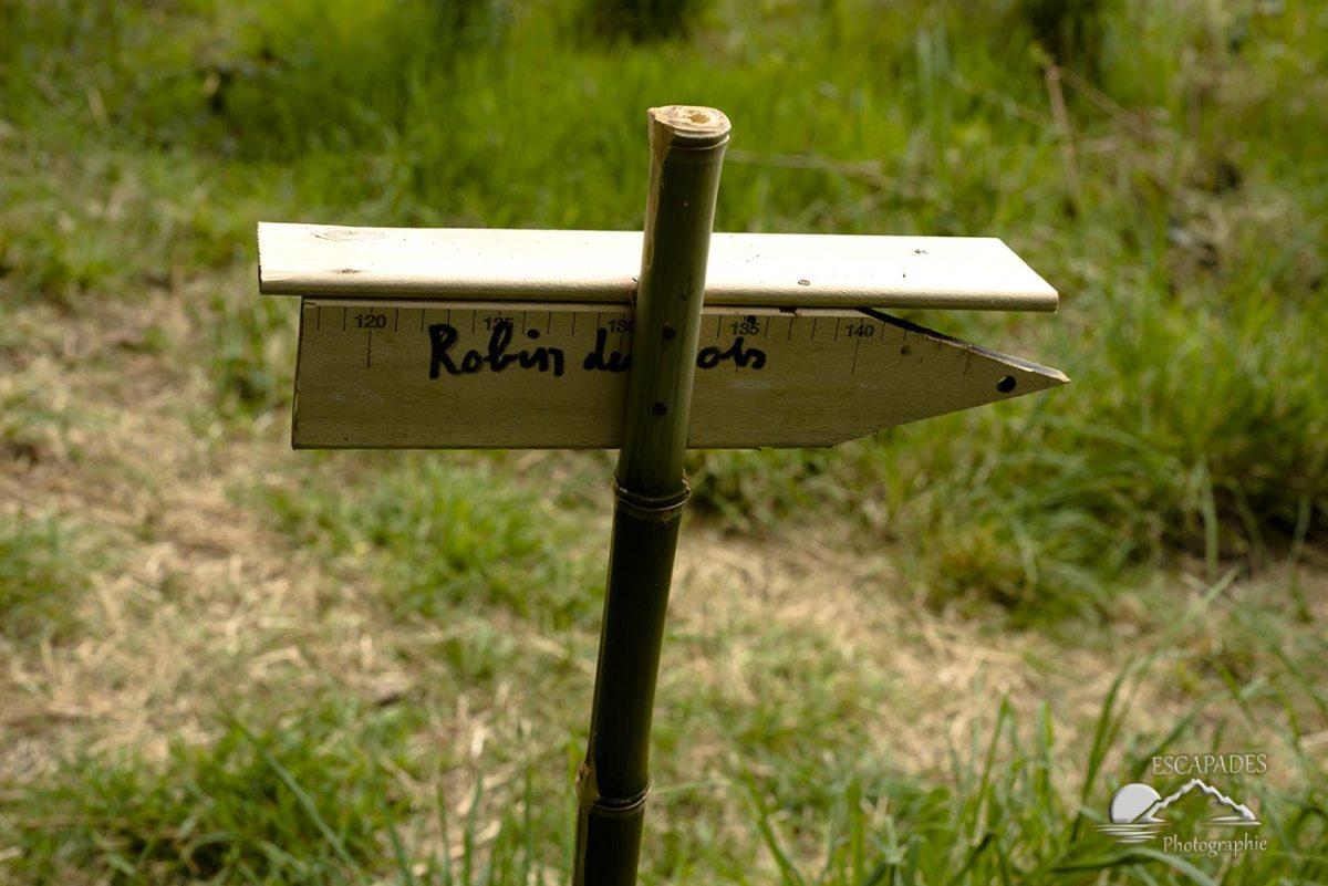 Les sentiers des Moulins - Robinb des bois