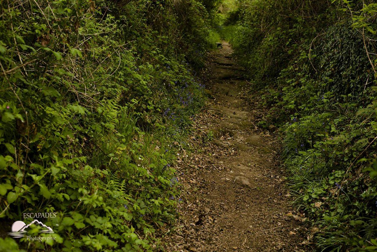 La route des Moulins - Lanzonnet le sentier