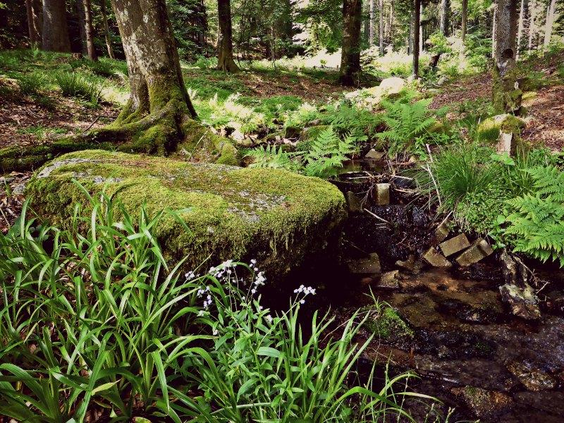 Zuflüsse bringen Quellwasser aus dem Schwarzwald in die Talsperre