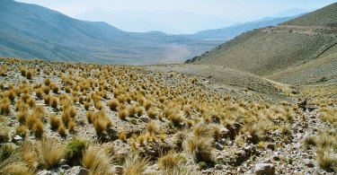 Peru: Altiplano