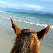 horse 2 at casa aramara