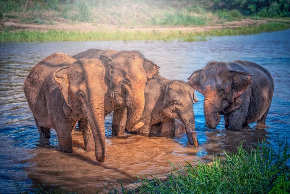 Chiang Mai travel guide - elephants in chiang mai