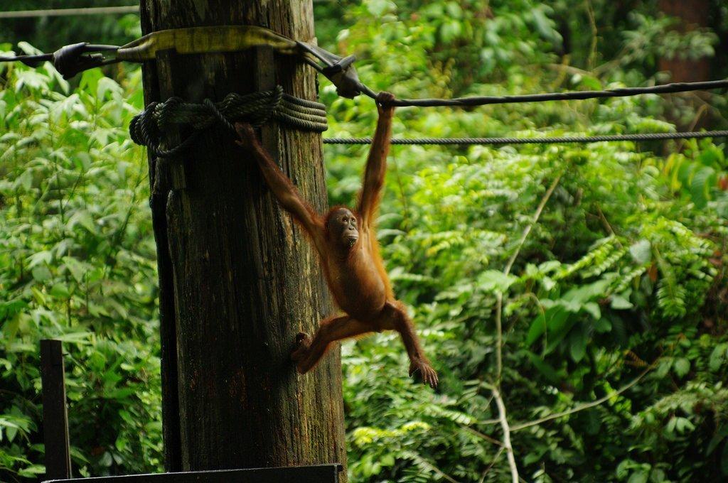 5 Best Things To Do In Sandakan, Malaysia
