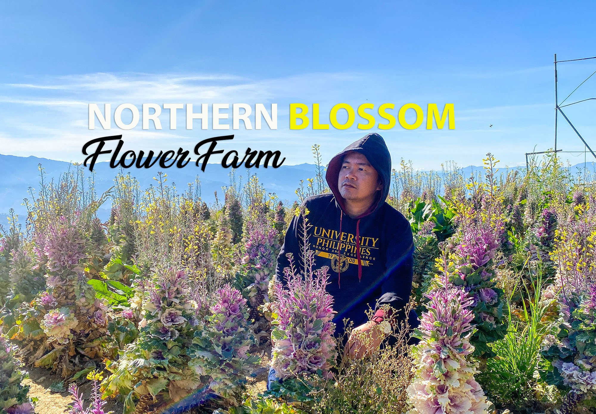 2020 Northern Blossom Flower Farm Travel Guide Blog