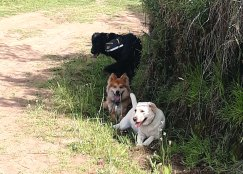 Tramo 3 - los perros buscan sombra para refrescarse