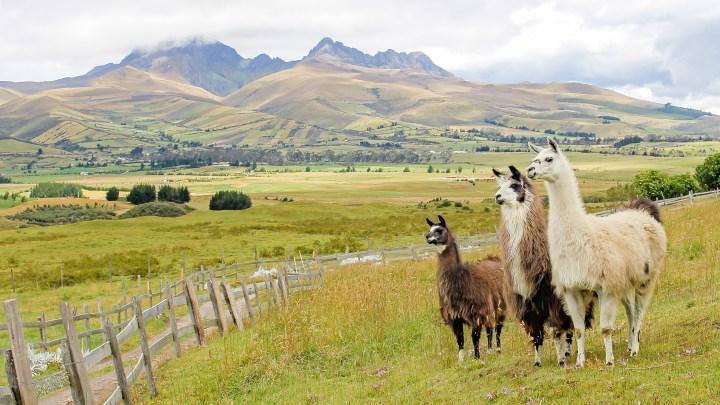 Comarca Ecuador Cotopaxi paisaje llamas