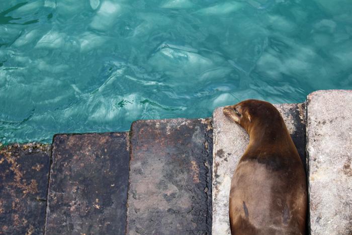 galapagos-ecuador-lobo-marino