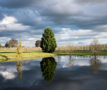 Tertini vineyardpage58&59