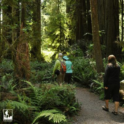 walking in nature benefits