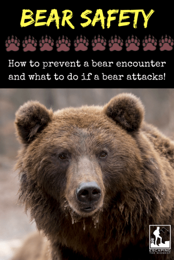 Bear Safety Bear Spray Bear Attack