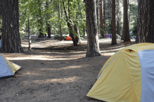 3 Essential Camping Skills