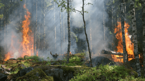 Forest fire safety and prevention, wildfire