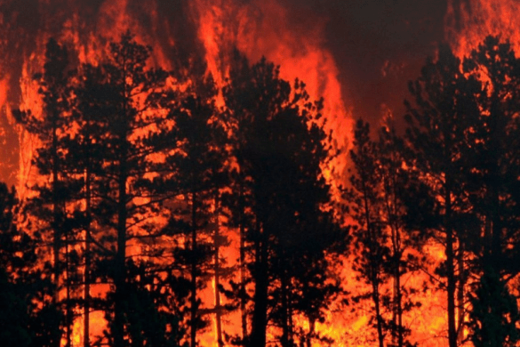 wildfire, forest fire prevention safety