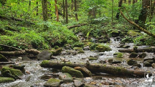 Great Smoky Mountain National Park.