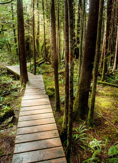 Hiking trail tofino