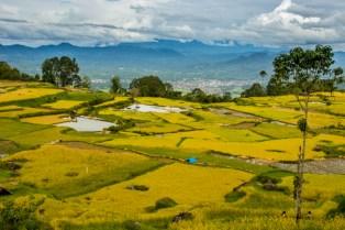 Tanah Toraja-12