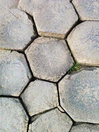 Escarolota - 02 Giant's Causeway 2016 (1)