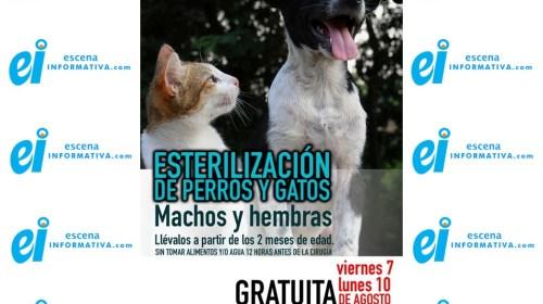 Viernes y lunes habrá campaña de esterilización de perros y gatos en Nopalucan