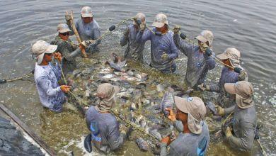 Photo of Este es el factor principal para que crezca la acuacultura en México